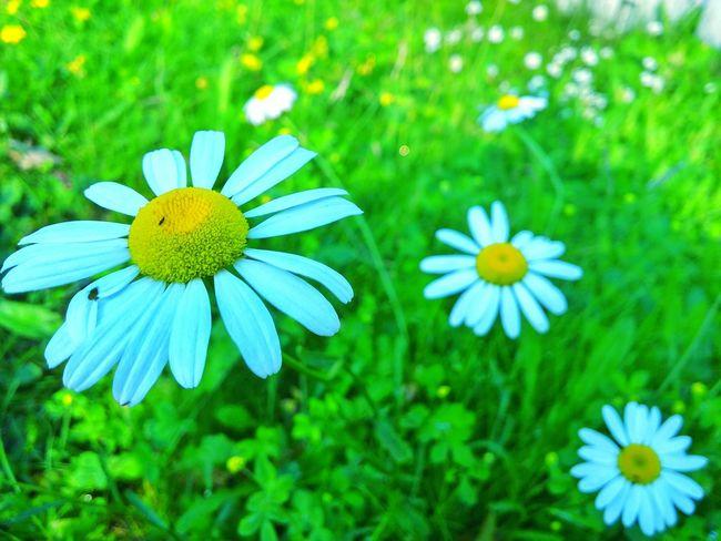 Flowers Flower Nature ,