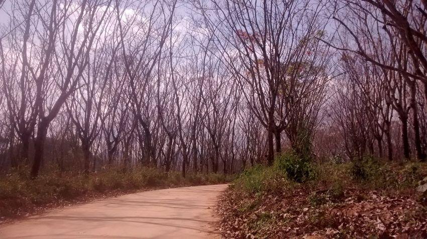 Trees Sky Track Meet