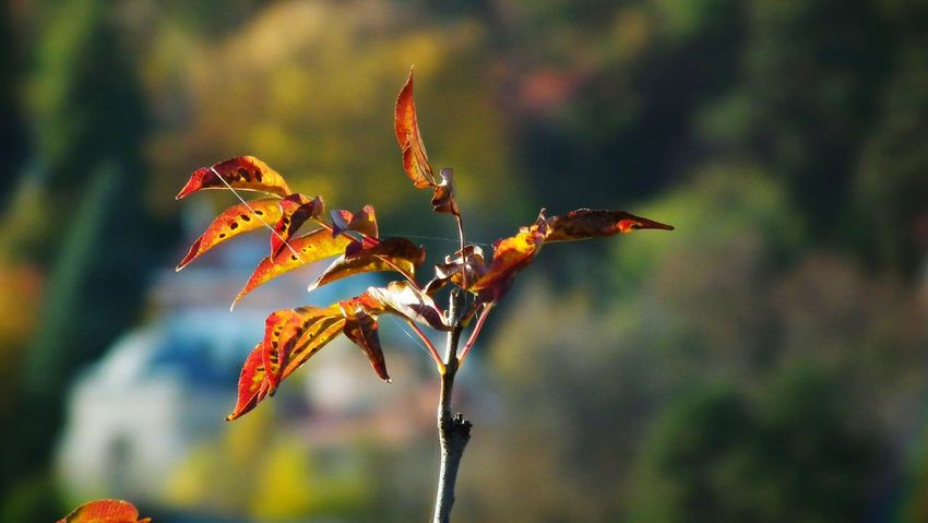 Autumn in Pécs Multi Colored No People Day Beauty In Nature Outdoors Plant Nature Pécs Autumn