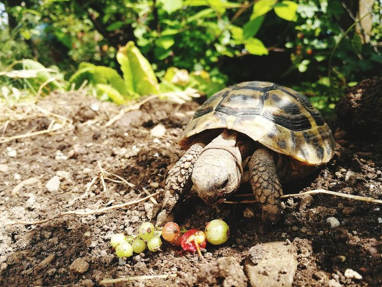 Nature Outdoors No People Day Animal Themes One Animal Tortoise Shell Reptile Nature