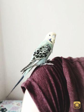 Maviş 😎