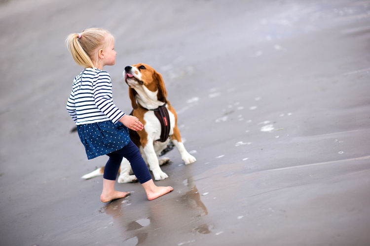 Girl and beagle on shore at beach
