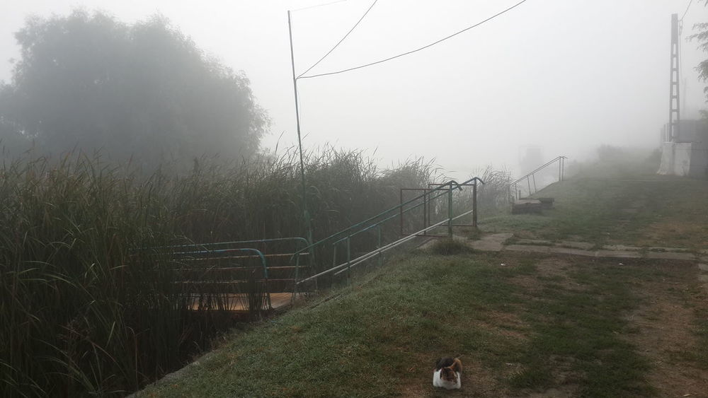 Cat♡ Day Fog Mila 23 Nature No People The Danube Delta Tranquility Tree Smartphone Photography