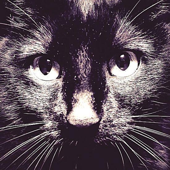 Igor Igor Cat Kater Canon Monster Eslebt Cats Schwarzerkater Eyes Besterkaterwogibt #frisstkleinedickekinder