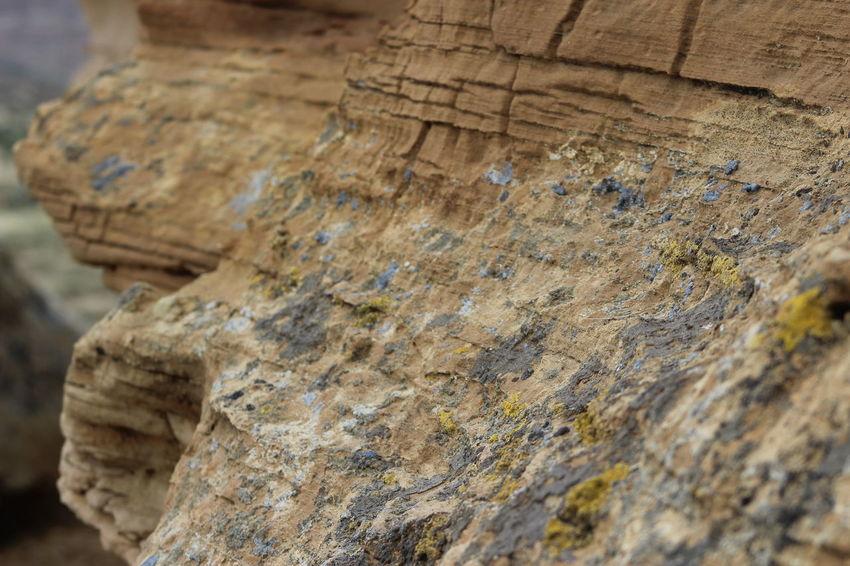 Rock Lichen Lichen On A Rock Rock Formation Wyoming Distant Background