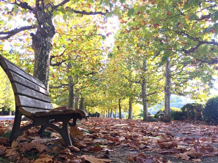 Can't waiting autumn season Tree Autumn Nature Park - Man Made Space Beauty In Nature Leaf Tree Trunk Scenics Sunlight Bench Outdoors Growth Idyllic Day No People Tranquil Scene