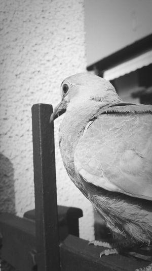 uccello solitario..