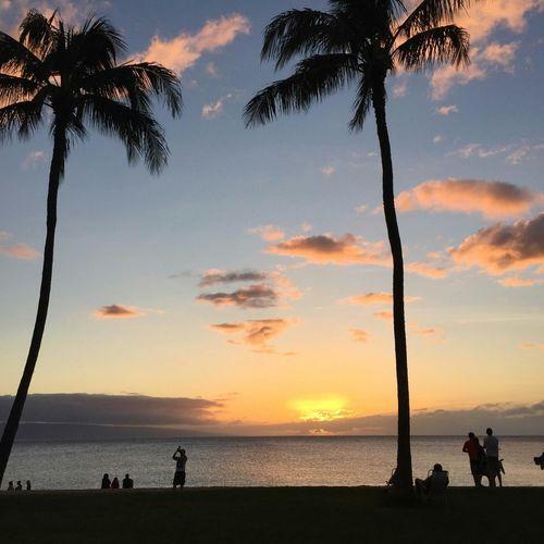 Maui Maui Hawaii Palm Trees Sunset Wino Vino