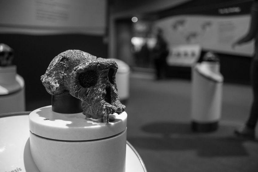 Bones Business Close Up Container Depth Of Field Detail Elephant Evolution  History Indulgence Large Group Of Objects Mammel Metal Museum Natural Natural History Museum Occupation Part Of Selective Focus Single Object Skull Smithonian Washington Washington, D. C. Wood