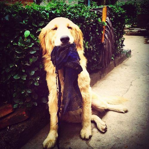 Pet My Love First Eyeem Photo