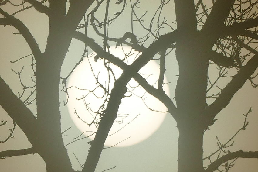 Foggy day.. Beauty In Nature Branch Day Dream States Ethereal Fog Foggy Foggy Weather Low Angle View Nature No People Outdoors Silhouette Silhouette_collection Sky Softness Sunset Tranquility Tree Break The Mold The Great Outdoors - 2017 EyeEm Awards Perspectives On Nature