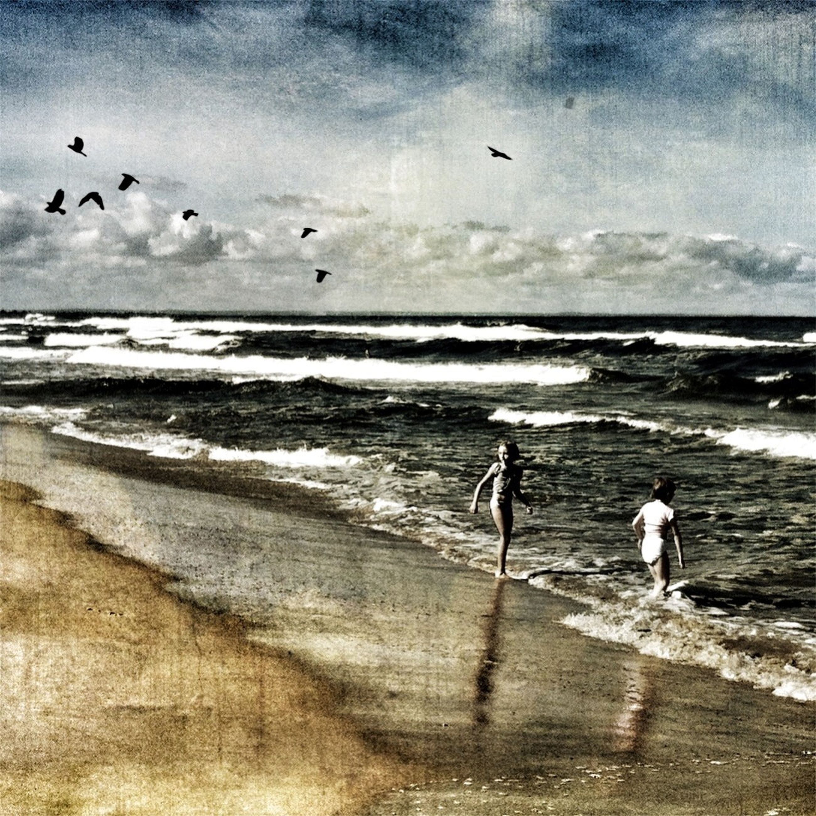 sea, beach, water, horizon over water, bird, shore, sky, animal themes, sand, wave, lifestyles, leisure activity, full length, flying, walking, animals in the wild, seagull, nature, men