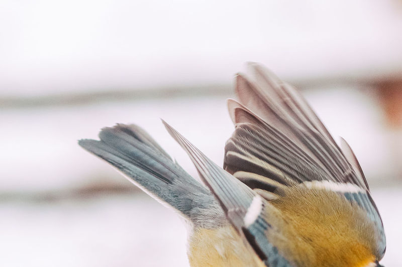Close-up of bird against the sky