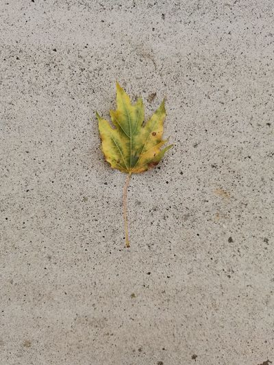 High angle view of plant leaf on wall