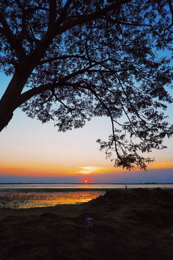 Sky Sunset Tree Beauty In Nature Plant Scenics - Nature Tranquil Scene Tranquility Water Nature No People Orange Color Sea Land Cloud - Sky Silhouette Outdoors Environment Beach