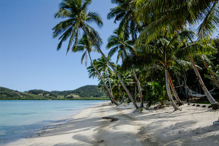 Tree Palm Tree Tropical Climate Plant Beach Water Sky Land Beauty In Nature Nature Sea Growth Scenics - Nature Tranquility No People Tranquil Scene Sunlight Coconut Palm Tree Sand Outdoors Tropical Tree Palm Leaf Fiji Islands