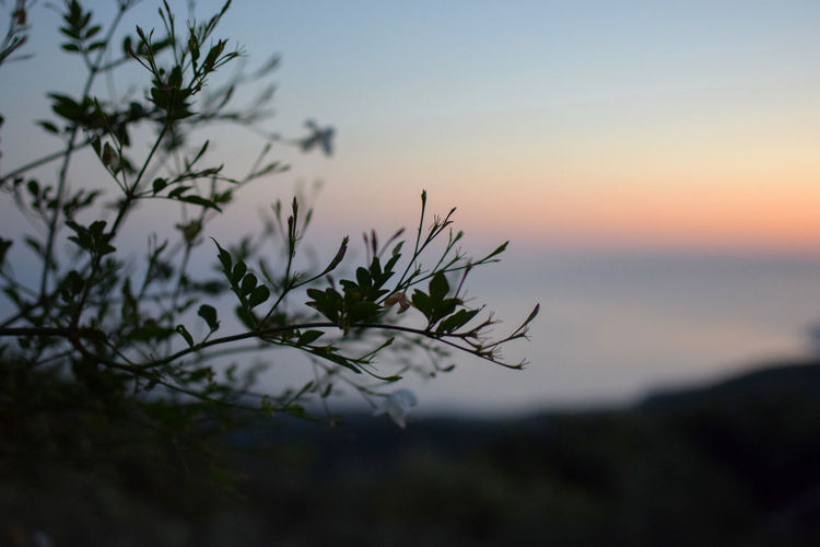 Flowers at dusk Beauty In Nature Branch Close-up Focus On Foreground Growth Nature No People Non-urban Scene Outdoors Plant Scenics - Nature Sea Selective Focus Silhouette Sky Sunset Tranquil Scene Tranquility Tree Water
