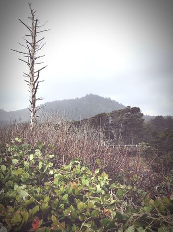 Peaceful Moments Mountains Groundcover Relaxing Taking Photos Oregon Coast Winter Depot Bay Oregon Dead Tree Winter Sky IPhoneography Nature Growth Plant Beauty In Nature Tranquility Tranquil Scene Day Landscape No People Outdoors Field Mountain Grass Scenics Sky Tree