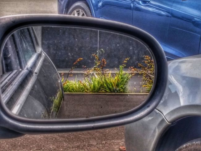 https://youtu.be/r8OipmKFDeM 😳And dont look back in anger, i heard you say.. 😶 Hdr_lovers Day Multi Colored Textured  Perspectives On Nature Springtime Outdoors Mirror Reflection Flax Vehicles At The Background Hdr_Collection Gardens Bark Concrete Jungle HDR Streetphotography Edited My Way City Life Dusty Seedpod Side-view Mirror Dont Look Back Seeds