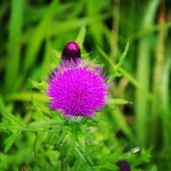 Flower Natur