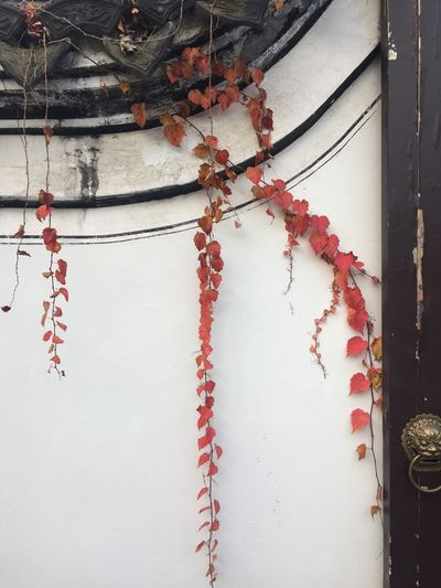 open your door, open your heart Red No People Plant Day Architecture Built Structure Autumn Mood Wall - Building Feature Building Exterior Nature Tree