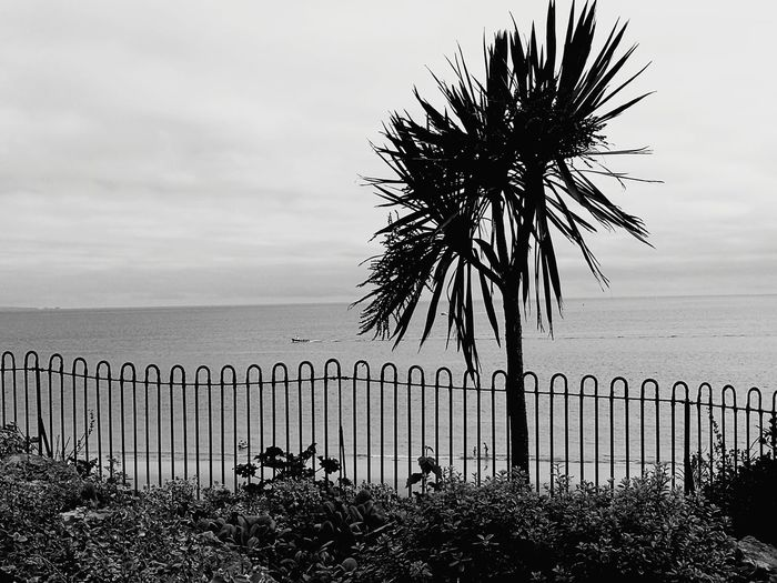 Pembrokeshire Palm Tree Blackandwhite Sea Horizon Over Water Outdoors Tree Beach No People Palm Tree Beauty In Nature Nature