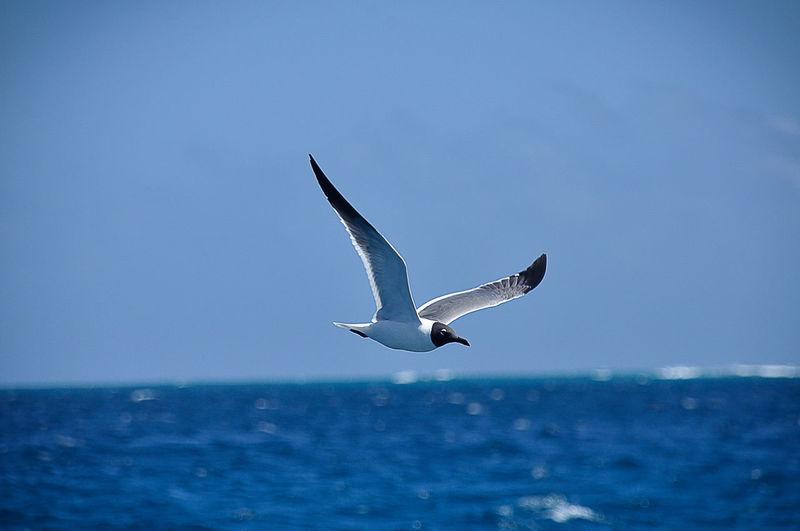 Birdy Animal