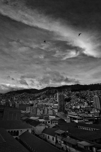 Birds in city against sky