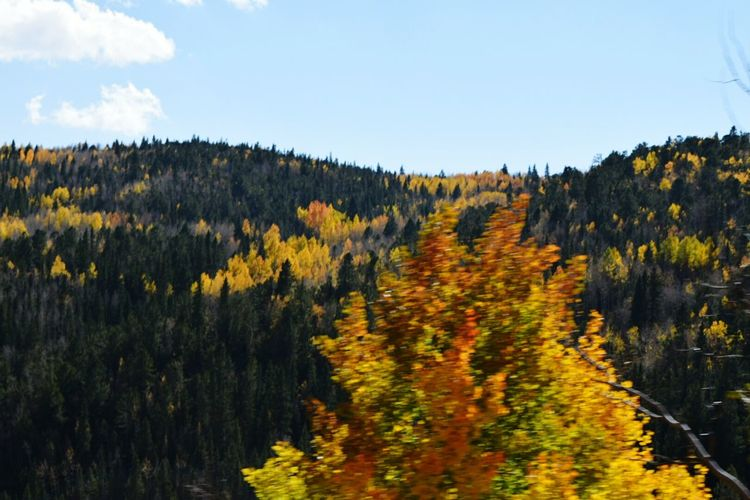 Coloradophotographer Colorful Colorado October 2015 Fall Colors Landscape #Nature #photography Paint The Town Yellow