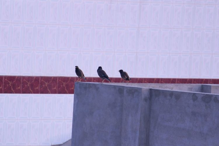 Birds perching on wall