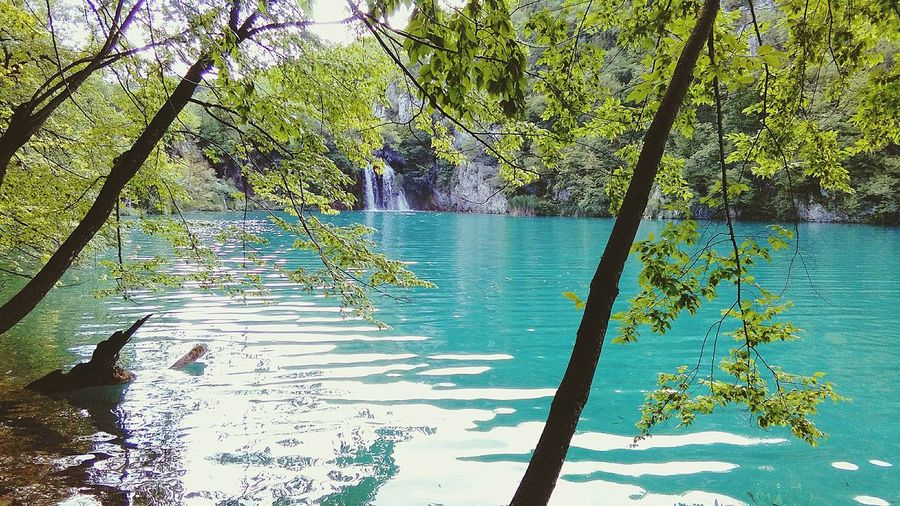 Plitvice Lakes - travels around Lake Beauty In Nature Tree Water Nature Growth Reflection No People Outdoors Plant Day Tranquility Lakesideview Landscape Travel Destinations Travel Croatia ❤