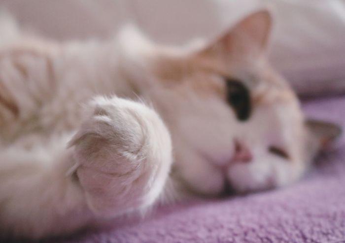 Sleeping Cats Sleeping Cat Sleeping Sleep Cat LoversCat Cat♡ Cats Catoftheday Bed Bedroom Catlovers Mycat Blancket Mycat♥