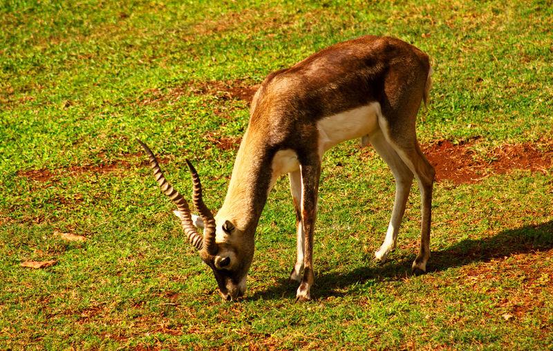 Animals In The Wild Animal Animal Photography Animal Themes Animal Wildlife Antilope Bovid Mamífero
