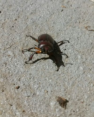 No People On Ground Sand Insect High Angle View Animal Themes Close-up Beetle Wildlife