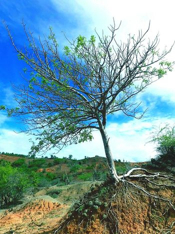 Vivo y en pie Tree Cloud - Sky Sky Nature Tree Outdoors Grass Growth Day Plant Beauty In Nature No People Blue Landscape Rural Scene Scenics Freshness