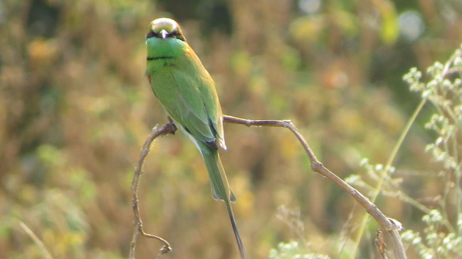 Green Bee Eater, Bird Close-up Day Outdoors Beauty In Nature Nature