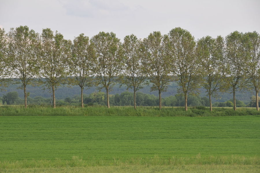 France In A Row Day Field Grass Green Color Land Landscape No People Non-urban Scene Tree Tree Alley