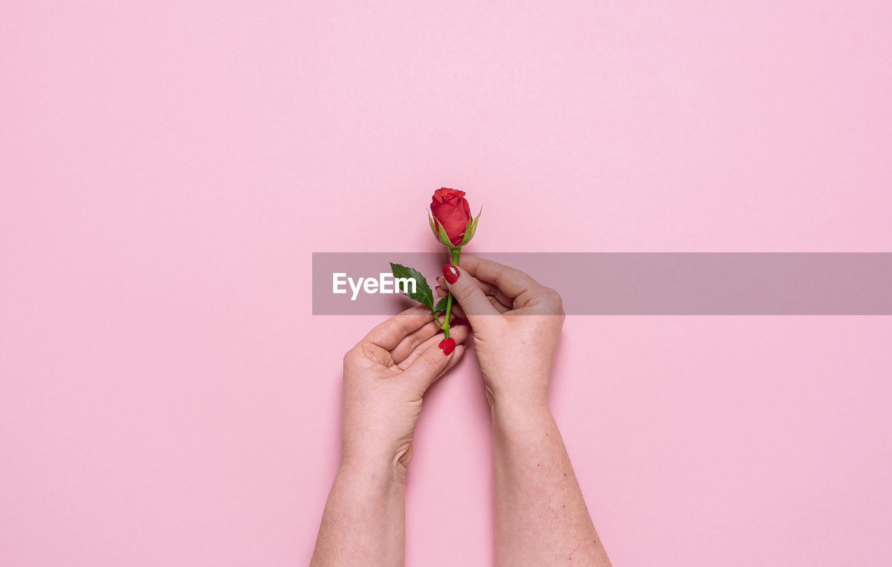 MIDSECTION OF WOMAN HOLDING PINK ROSE AGAINST COLORED BACKGROUND