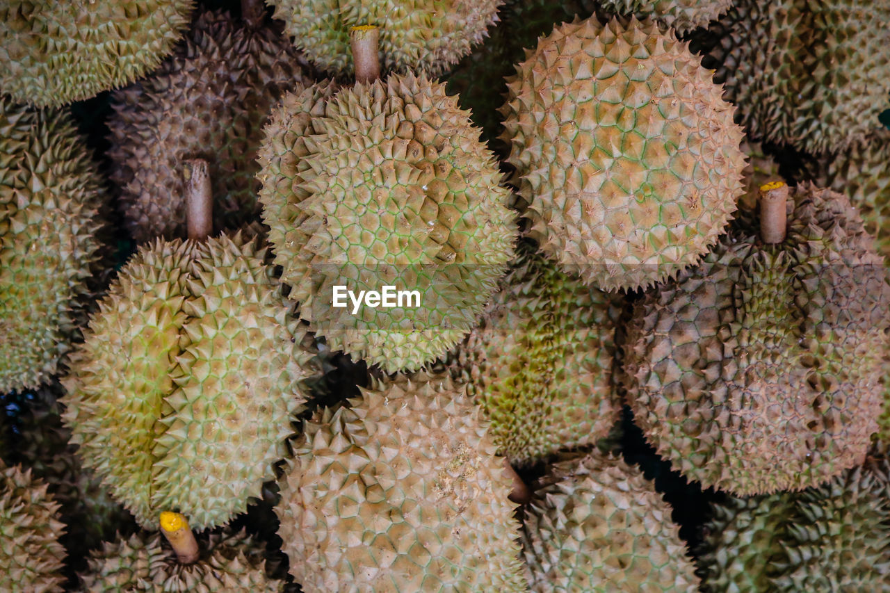 food and drink, cactus, food, fruit, no people, succulent plant, healthy eating, freshness, full frame, market, spiked, thorn, growth, retail, close-up, tropical fruit, backgrounds, wellbeing, large group of objects, plant, outdoors, spiky, ripe, climate