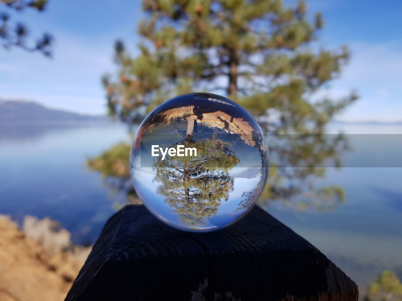 sphere, nature, focus on foreground, crystal ball, tree, sky, transparent, reflection, plant, outdoors, day, close-up, glass - material, water, beauty in nature, no people, land, scenics - nature, geometric shape