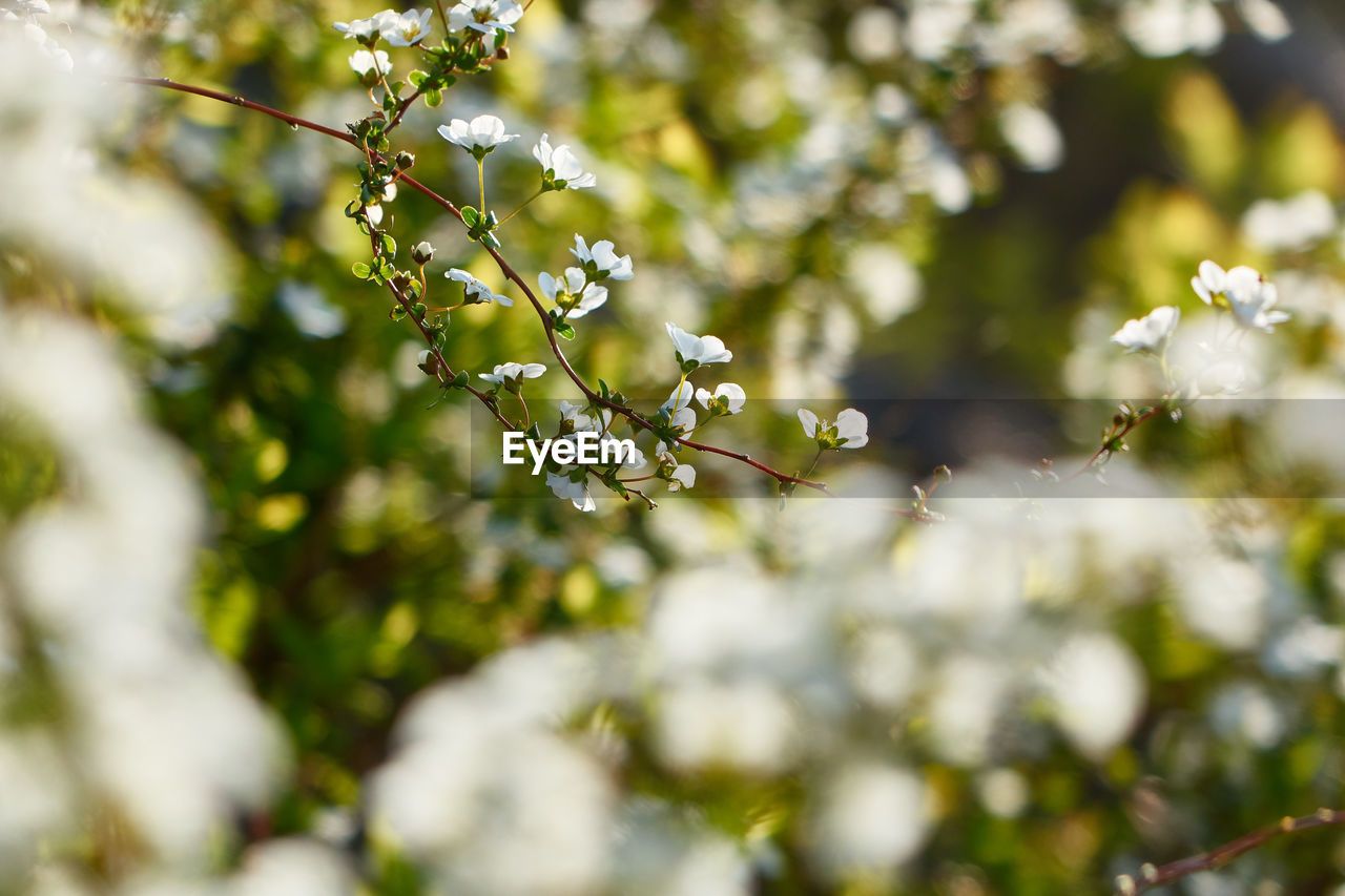 growth, nature, tree, freshness, branch, beauty in nature, day, no people, outdoors, fruit, fragility, close-up