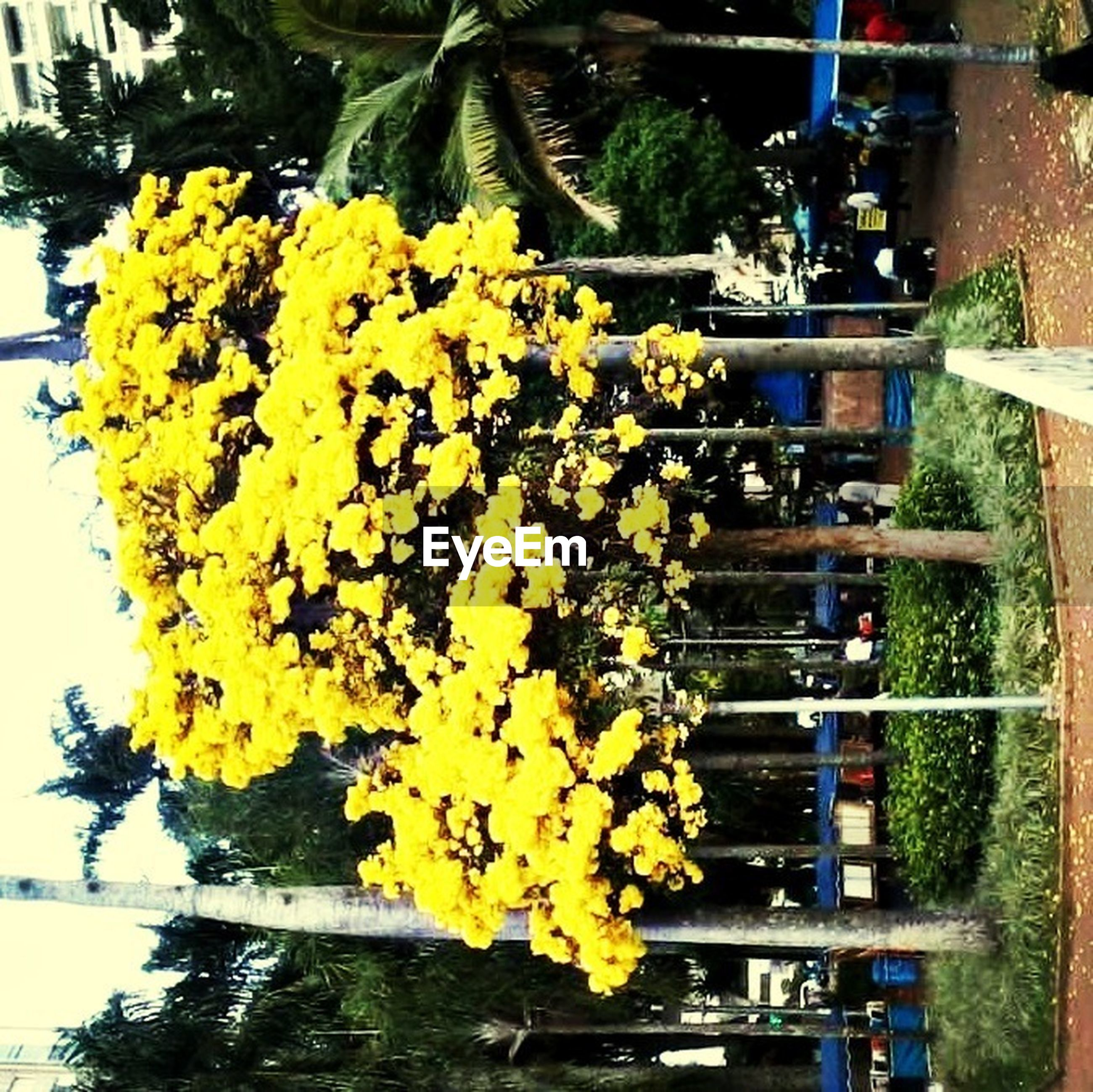 flower, yellow, freshness, building exterior, built structure, architecture, growth, plant, incidental people, day, outdoors, fragility, nature, men, potted plant, water, tree, person, petal