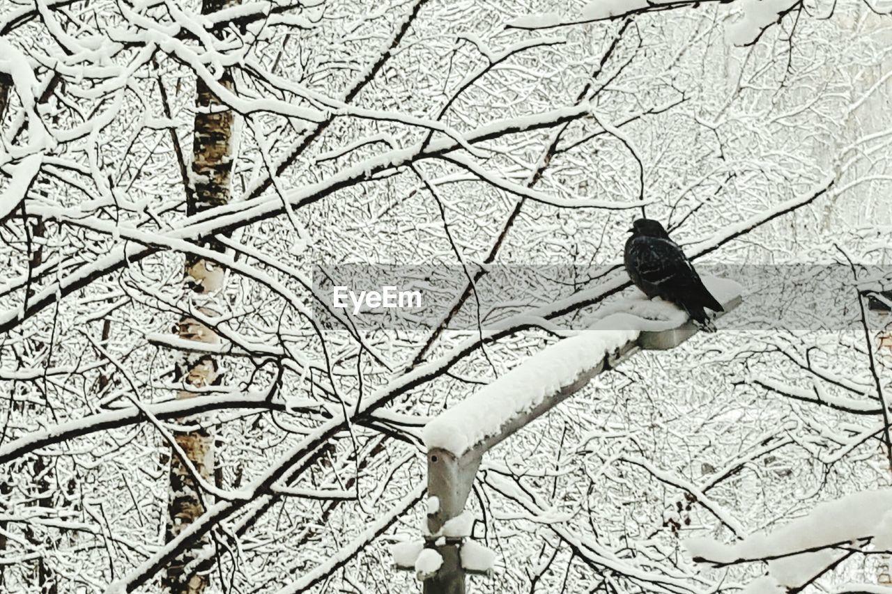 Bird Perching On Street Light Against Frozen Trees