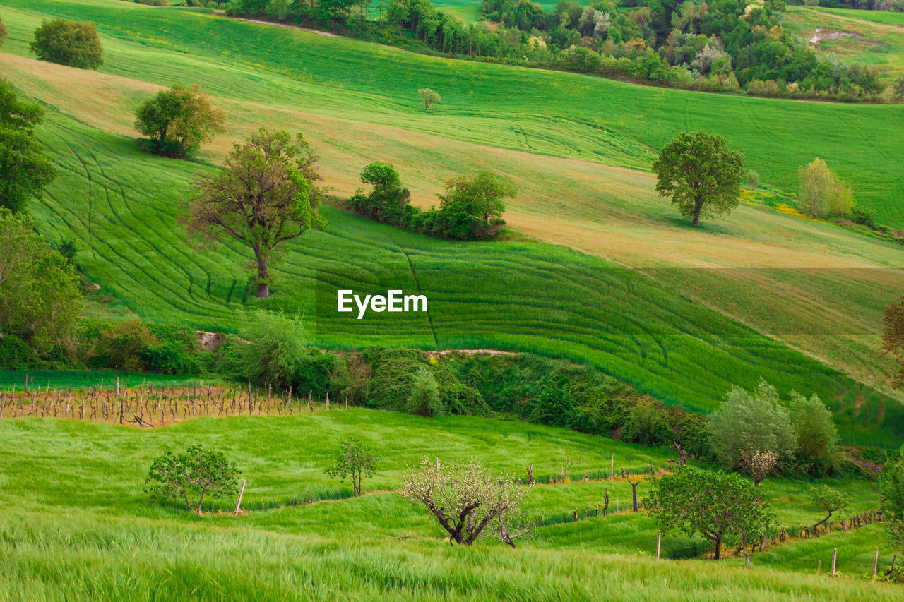 grass, plant, landscape, green color, environment, scenics - nature, field, tranquil scene, tree, tranquility, beauty in nature, rural scene, land, agriculture, nature, no people, growth, day, non-urban scene, outdoors, rolling landscape
