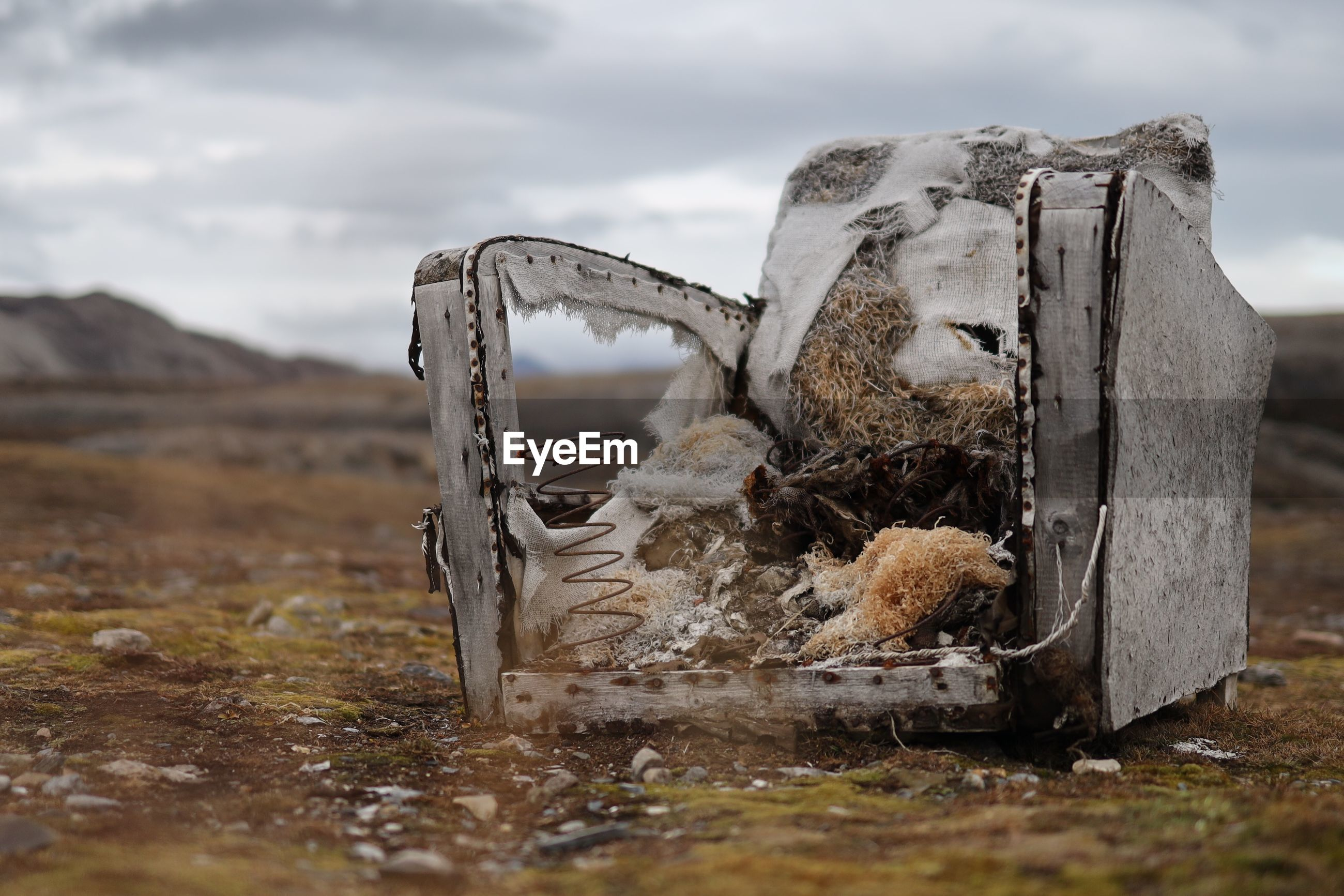 VIEW OF AN ABANDONED ANIMAL ON LAND