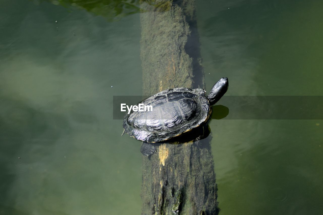 High angle view of turtle on log in lake