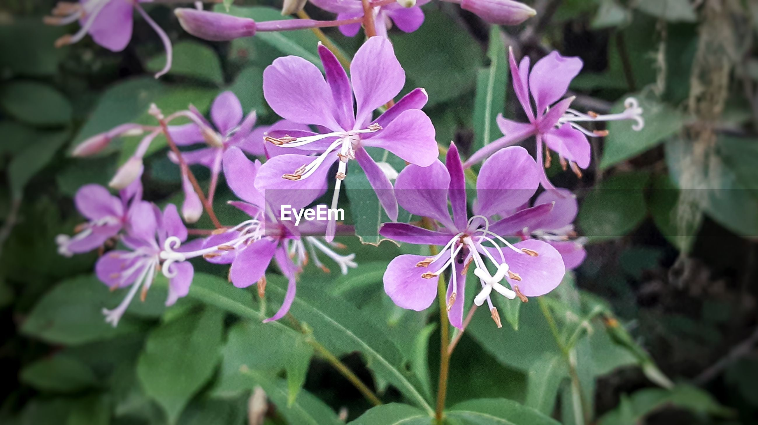 CLOSE-UP OF FRESH PINK FLOWERING PLANT