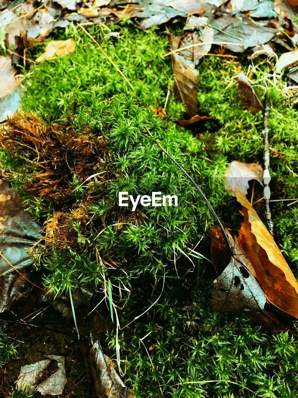 plant, leaf, growth, plant part, nature, green color, no people, day, land, field, high angle view, moss, close-up, grass, beauty in nature, outdoors, forest, dry, tranquility, tree, leaves