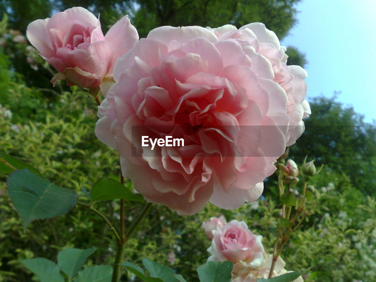 flower, petal, growth, nature, beauty in nature, plant, fragility, pink color, blooming, flower head, no people, day, outdoors, close-up, freshness