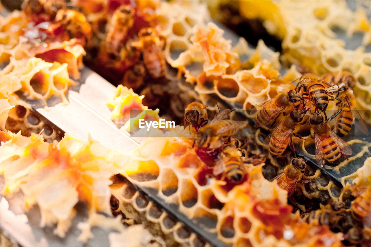 food and drink, food, close-up, selective focus, no people, indoors, freshness, dairy product, meal, dried food, snack, insect, nature, extreme close-up, dried fruit, sweet food, healthy eating, full frame, cheese